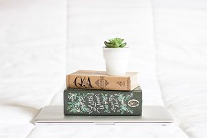 Succulent On Books On Laptop