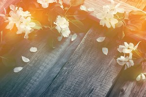 Rustic boards background with branches of flowering apple trees.