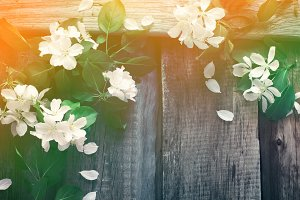 Spring frame background with flowering branches of apple