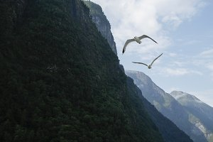 Fjords in Norway with seagulls