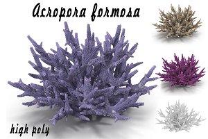 Acropora formosa