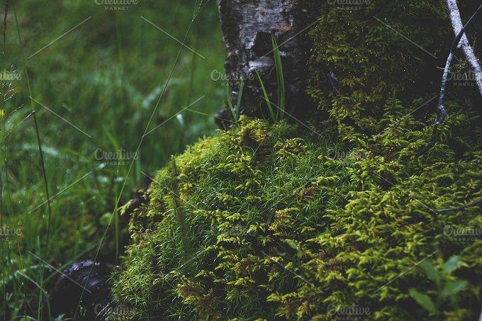 Trunk with moss. Scotland. UK - Nature