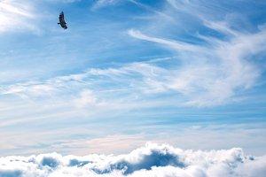Vulture on sky