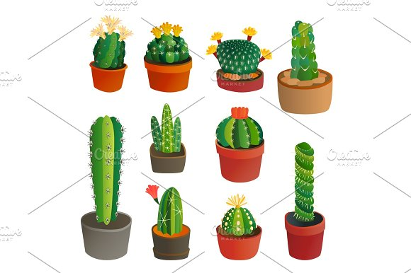 Cactus Flat Style Nature Desert Flower Green Cartoon Drawing Graphic Mexican Succulent And Tropical Plant Garden Art Cacti Floral Vector Illustration
