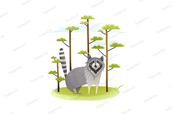 Raccoon In The Wild Nature