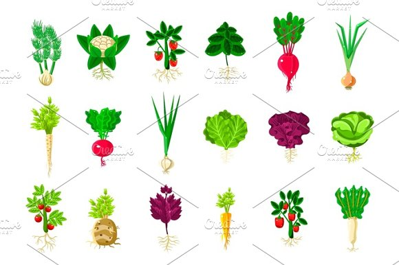 Fresh Vegetable Plants With Roots Set