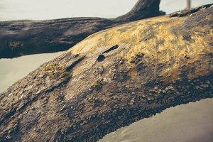Driftwood Gold Texture