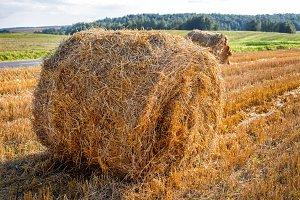 round bale hay