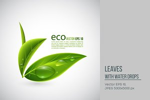 Realistic eco leaves.
