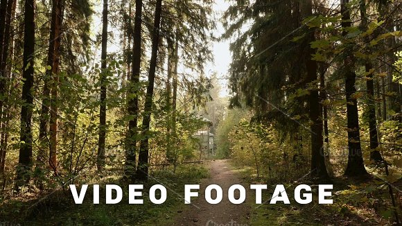 Walkway To Abandoned Kids Camp In The Forest Autumn Daytime Smooth Dolly Shot