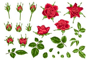 Set of decorative red roses.