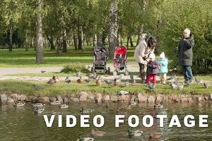 Young family feeds the pigeons and ducks. Autumn daytime. Smooth dolly shot