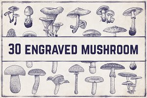 Engraved vector mushroom collection