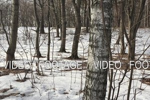 Spring forest - a passage