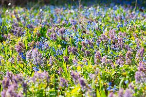 Field ofField of spring flowers