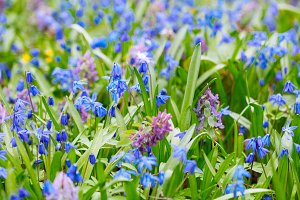 Field ofField of spring flowers