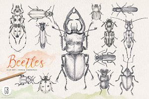 Hand drawn pencil beetles bugs