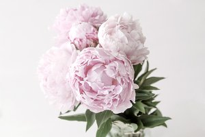 Pink Peonies Styled Stock Photo