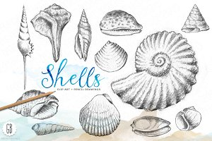 Shells, handdrawn pencil