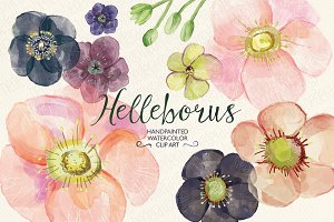 Watercolor hellebore flowers clipart