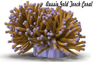 Aussie Gold Torch Coral