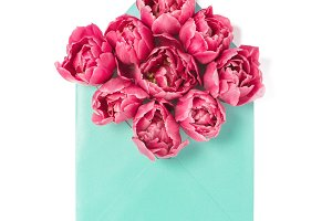 Pink tulip flowers in envelope