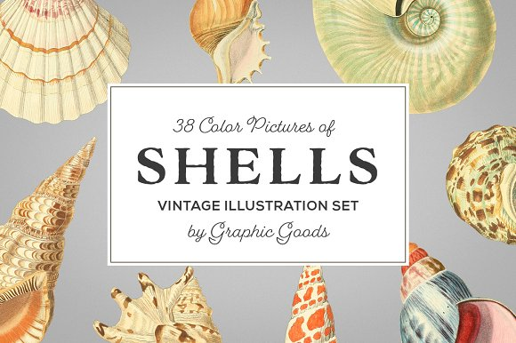 Shells Vintage Color Illustrations