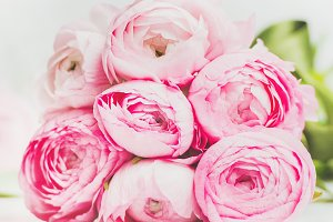 Light pink spring ranunkulus flowers