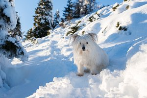 Dog in winter mountains