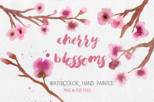 Cherry Blossoms- Watercolor clipart…