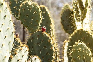 Cactus in the Sun