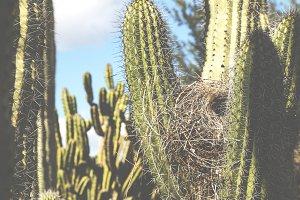Cactus and Bird Nest Fade