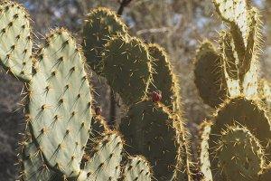 Cactus in the Sun 2