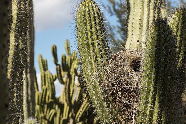 Cactus and Bird's Nest