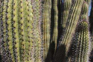 Prickly Cactus 2