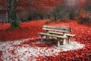 Autumnal rest