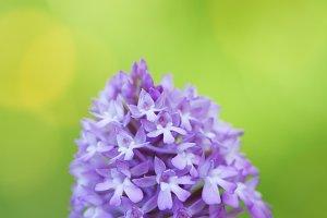 Beautiful wild purple flower detail