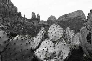 Black and White Cacti and Red Rocks