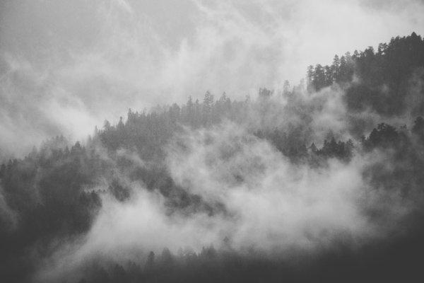 Foggy Hurricane Ridge