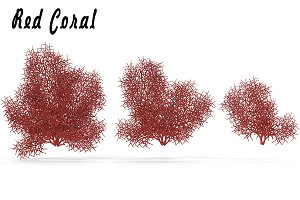 Red Coral#1