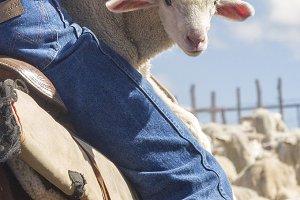 Vertical SheepHerder/Lamb