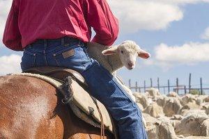 Sheep Herder and Lamb