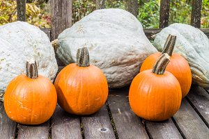 Blue hubbard squash and pumpkins