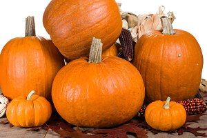Group of orange pumpkins