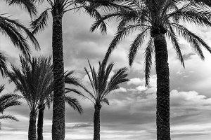 View Mediterranean Sea and Boy