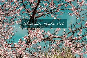 Almond Trees in Spain Photo Set