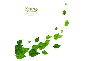 Flying green leaves on white background