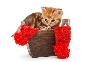 Little kitten in a wooden box
