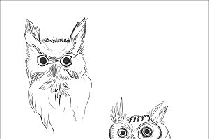 owl, sketch, vector illustration
