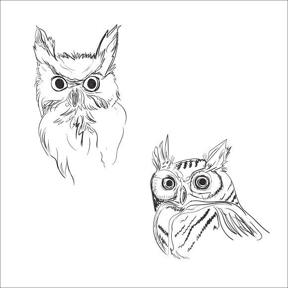 Owl Sketch Vector Illustration